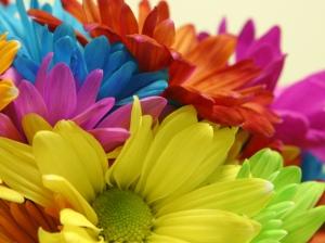 ფერადი ყვავილები