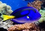 ჭრელი თევზი