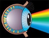 თვალი ხედავს ფერებს
