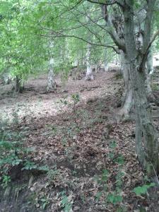 ფასანაურის ტყე