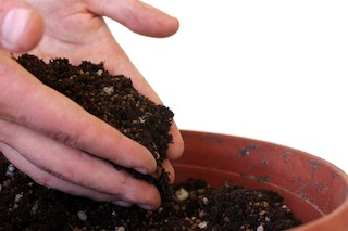 bonsai-seeds-soil