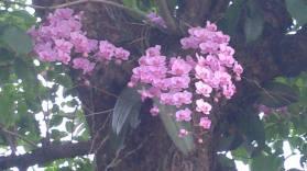 ორქიდეა ხეზე